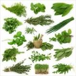 طرح توجیهی کاشت گیاهان دارویی