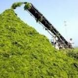 طرح کارآفرینی تولید خوراک دام غنی شده
